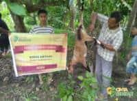 tebar qurban 1439 H di Aceh 03